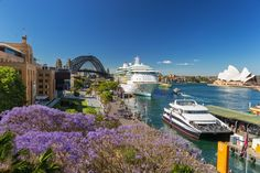 Discover Sydney in bloom at The Rocks and more as the lilac leaves of the Jacaranda tree breathe new life into the city throughout the springtime. Australia Capital, Moving To Australia, Australia Living, Sydney Australia, Australia Travel, Brisbane, Melbourne, The Rocks Sydney, Road Trip