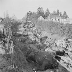 The Falaise Gap: Dead German horses among devastated vehicles and equipment in a lane in the Falaise pocket; this was a typical scene after the battle.