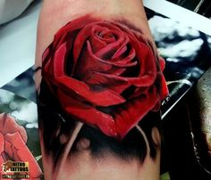 image roses rouge