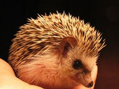 I worship the Golden Hedgehog.  Eh, I guess this fella will do.