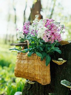 Flowers planted in a basket, hanging on a stump. So simple, so pretty, so ready for spring.