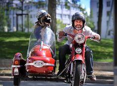 JAWA Sidecar, Vintage Cars, Motorcycle, Vehicles, Animales, Motorcycles, Car, Classic Cars, Motorbikes