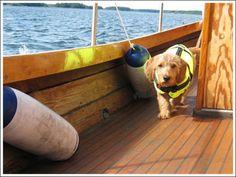 Basset walking aboard