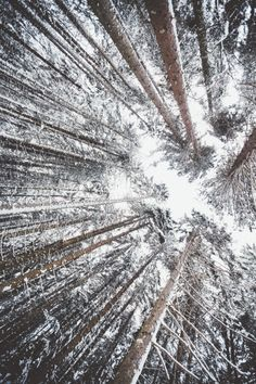 44 super ideas for nature photography trees wonderland white christmas Snow Photography, Christmas Photography, Tumblr Photography, Amazing Photography, Landscape Photography, Photography Ideas, Snow Forest, Winter Wallpaper, Nature Wallpaper