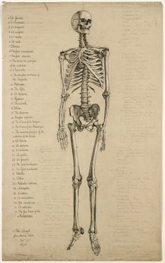 Anatomical+drawing+of+a+skeleton+1840+C+Science+Museum,+Science+and+Society+Picture+Library_edited-1.jpg (1005×1600)