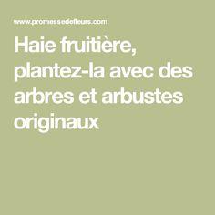 Haie fruitière, plantez-la avec des arbres et arbustes originaux