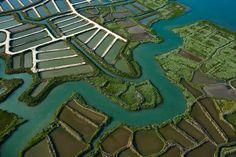 Marais de l'embouchure de la Seudre - Marennes 17320 - Charente Maritime (17) - Poitou Charente