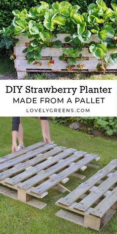 How to build a Strawberry Planter using just a single wood pallet. It takes an afternoon to build and allows you to grow strawberries raised off the ground and on patios Backyard landscaping drought tolerant plants How to make a Strawberry Pallet Planter Garden Yard Ideas, Veg Garden, Vegetable Garden Design, Garden Planters, Lawn And Garden, Vegetable Gardening, Garden Hose, Pool Garden, Diy Garden Box