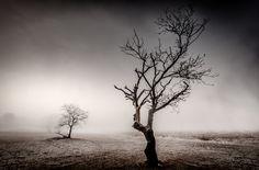 Nieuw in mijn Werk aan de Muur shop: Desolate