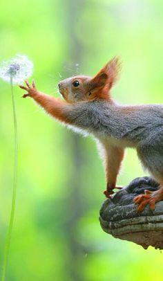 Simple pleasure the entirety in bokeh # rodents - Lustiges - - Animals wild, Animals cutest, Animals funny, Animals drawings Cute Little Animals, Cute Funny Animals, Nature Animals, Animals And Pets, Farm Animals, Beautiful Creatures, Animals Beautiful, Cute Squirrel, Squirrels