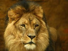 Celebrities tweet their horror after Cecil the lion, being studied by Oxford University, is shot dead