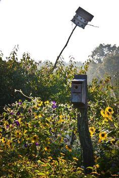 No jardim, as casas de passarinho foram colocadas em meio a flores e arbustos. A mais alta, presente de um amigo dos artistas Jared Handelsman e Portia Munson, vem se inclinando com o passar do tempo (o que agrada ao casal)
