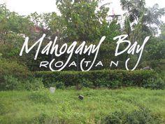 Mahogany Bay in Isla Roatan, Honduras-Did catamaran ride and snorkeling here on our honeymoon Bahamas Cruise, Cruise Vacation, Vacation Trips, Vacation Spots, Vacations, Carnival Liberty Cruise, Carnival Legend, Western Caribbean, Roatan