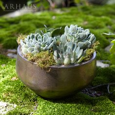 succulents fit perfectly into our metallic pot.