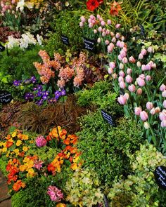 ONE MONTH until the 30th anniversary Northwest Flower & Garden Festival!  Dreaming of hyacinths lilies roses... I don't know about you but I could use a breath of spring right now!  #Cheersto30Years #SpringinFeb