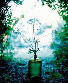 evalunda: April 2014   flower book by Denise Grunstein