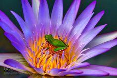http://ift.tt/2jr6Zkd #Nature_breathtaking #Photos Best Friends by nixpix3