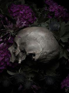"My new computer ""Desktop"" - ©Thomas Deschamps - Still Life Memento Mori, Tumblr, Vanitas, Gothic Art, Skull And Bones, Macabre, Occult, Still Life, Garden Sculpture"