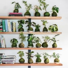 Kokedama is a traditional Japanese garden method, and easy to make at home!