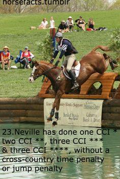 Neville the wonder horse!