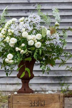 Green & Gorgeous - June 171 An urn filled with Hornbeam, Jasmine, Campanula, Ammi and the Rose 'Sweet Child of Mine'.