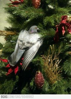 So I go back home..& the Holy Spirit is on my Christmas Tree