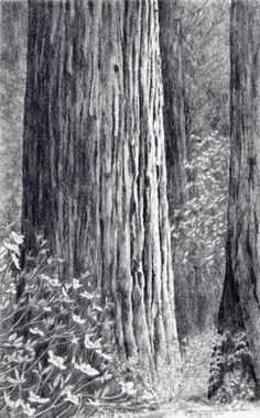 Redwood & Dogwood, 14x11 framed, $400