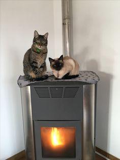 No que quentinho é que se está bem 🙂   #4EveryPet #Gatoscomfrio #Romeu #Mia
