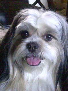 """Please vote for this entry in AMAZING """"SUPER DOG"""" BEAUTY PAGEANT!"""