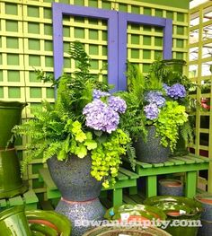 Chicagoland Garden Tour - hydrangeas in a planter. The colors of yellow, neon green and purple. Outdoor Flowers, Outdoor Planters, Garden Planters, Outdoor Gardens, Glass Garden, Container Plants, Container Gardening, Gardening Tips, Flower Containers