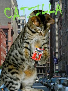 Wordless Wednesday – CATZILLA   Zee & Zoey's Cat Chronicles