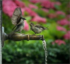 charmed by birds...