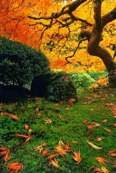 Stunning Views: Autumn in Portland Japanese Garden, Oregon
