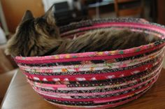 A cat bed they will love