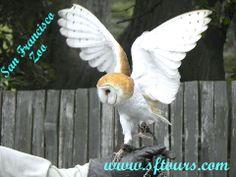 San Francisco Zoo San Francisco Tours, Wine Country, Owl, City, Amazing, Animals, Animales, Animaux, Owls