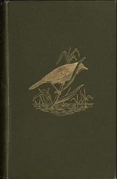 Gold-blocked bird in reeds, 1825 The Natural History of Selbourne by Gilbert White