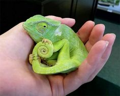 cute, green, and animal image