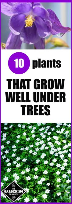 Grow Well Under Trees 10 plants that grow well under trees. Try planting one of these in your garden. Includes shrubs, annuals and plants that grow well under trees. Try planting one of these in your garden. Includes shrubs, annuals and perennials Growing Plants, Garden Shrubs, Garden Planning, Plants Under Trees, Shade Plants, Perennials, Plants, Planting Flowers, Shade Garden Plants