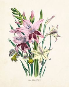 Les Lilies No.2 Botanical Print - Canvas Art Print