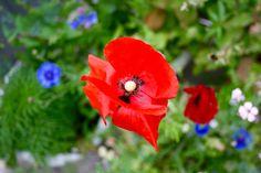 #seedball #flowers #garden