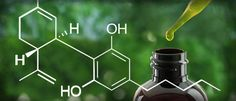 CBD effects – calming the mind,  balancing the body