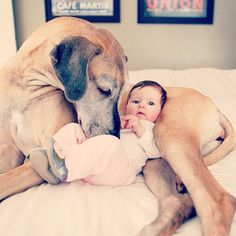 Adorable baby! Love the pic of dog and baby