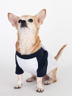 American Apparel - White & Navy Poly-Cotton Dog Raglan