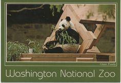 1 Used Postcard, Washington National Zoo, Giant Panda, c1980s, good shape by VintageNEJunk on Etsy