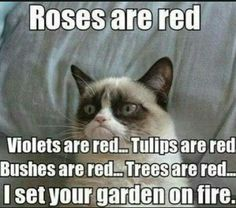 Funny pictures about Grumpy Cat is feeling poetic. Oh, and cool pics about Grumpy Cat is feeling poetic. Also, Grumpy Cat is feeling poetic. Grumpy Cat Quotes, Meme Grumpy Cat, Grumpy Kitty, Grumpy Baby, Grumpy Cat Birthday, Kitty Cats, Meme Comics, Funny Cats, Funny Animals