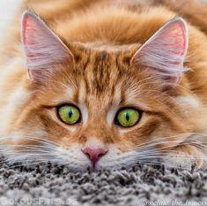 """Mi piace"": 27, commenti: 1 - Starweaver (@starweaver) su Instagram: """"You're up late. Pet me."" #Cats #catsofinstagram #kittens #kitty #rescuecat…"""