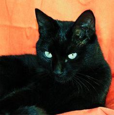 See full size image. A very beautiful cat. I love black cats. This is why I do this. Love is unconditional. Open mind leads to an open heart. Cats are cats. The Incensewoman