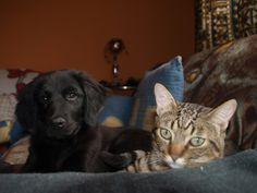 #Freya #Dog #Tom #Cat #Puppys #LoveAnimals #MyMonsters #MyPets #CanaryIsland