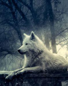 Intimidating wolf eyes in the dark
