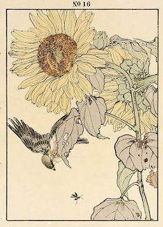 Imao Keinen : Sunflower, Yellow Bunting at Davidson Galleries Botanical Line Drawing, Botanical Drawings, Botanical Illustration, Illustration Sketches, Illustrations, Davidson Galleries, Chinese Art, Chinese Brush, Oriental